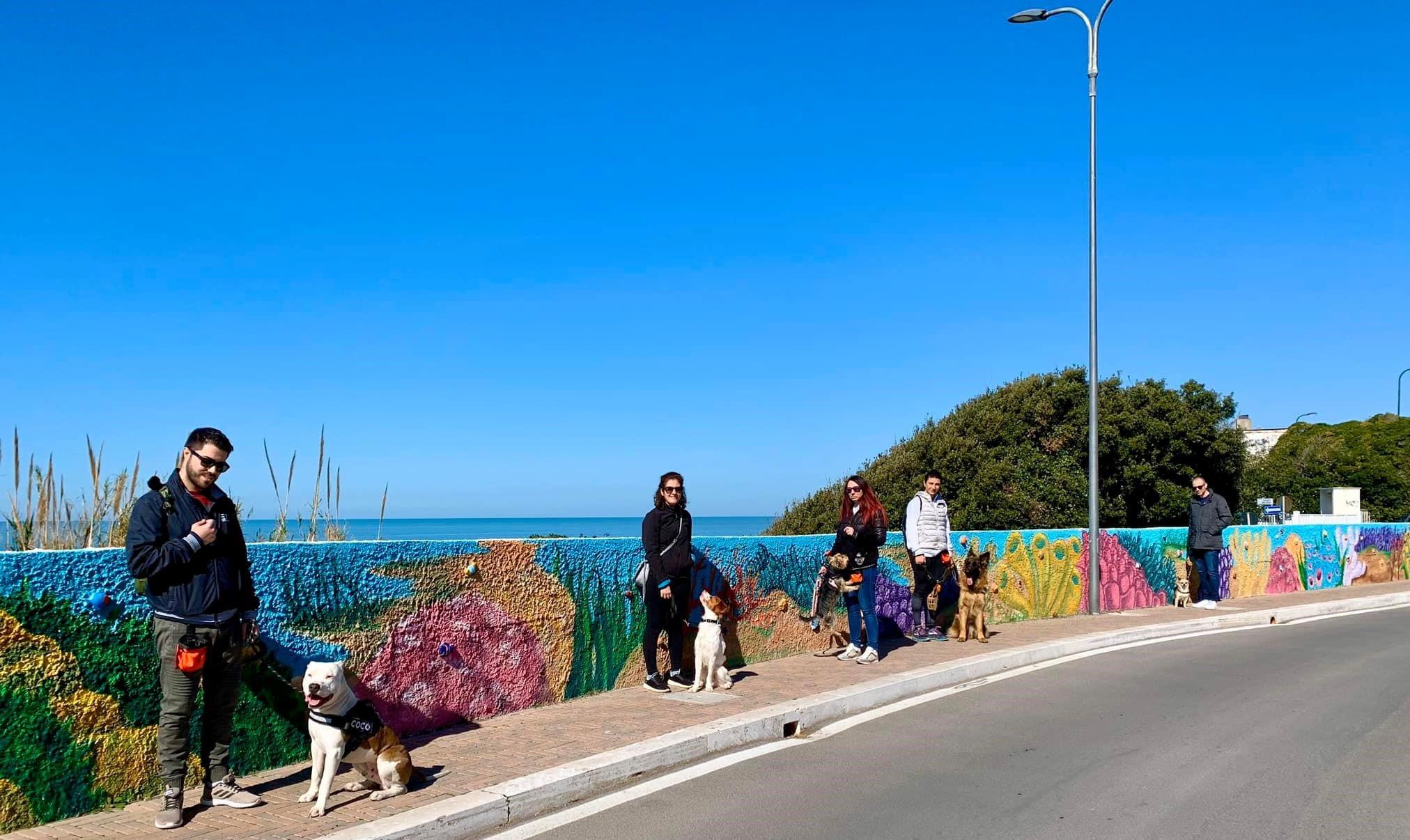 city-dog-walk